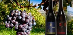Waitapu-Estate-Vineyard